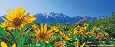 "Grand Teton National Park has several parcels of privately held land within its boundaries (""inholdings"") that are under threat of development. Check out what NPCA is doing to help protect this land and make them permanent pieces of the park."