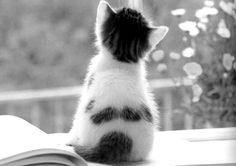 Sweety pie #kitten