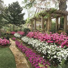 Plant Encore Azaleas Along With Other Contrasting Plants 400 x 300