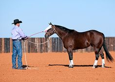 Training Tip of the Week: Avoid being sneaky when desensitizing your horse by Clinton Anderson