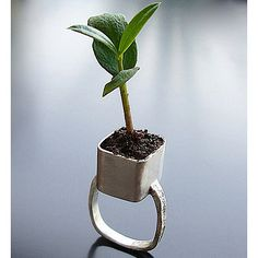 planter ring. (could only wear as I sat at my computer typing.. or this plant wld be on the floor)