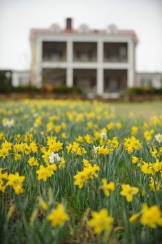 The back porch of P. Allen Smith's Garden Home with daffodils. Visit www.pallensmith.com for more photos, recipes, and tips.