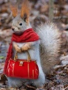 Wow! And where did you get the purse and the scarf?