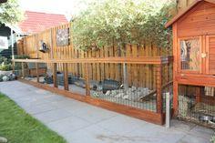 konijnenren - Google zoeken Bunny Cages, Rabbit Cages, Bunny Hutch, Mini Lop Rabbit, Rabbit Run, House Rabbit, Bunny Rabbit, Guinea Pigs, Diy Guinea Pig Cage