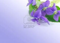 Spring border with white copy space and violet bouquet
