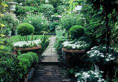 garden by Anthony Noel