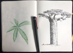 Sketches, Portraits, Australia, Ink, Tattoo, Drawings, Head Shots, Tattoos, India Ink