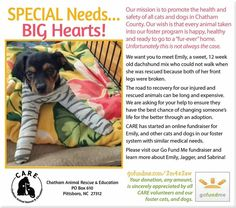 Friends, we need your help! CARE has taken in a number of Special Needs dogs and cats recently. Can you chip in to help us help animals like Emily, Jagger, and Sabrina so they'll be happy, healthy, and ready for their forever homes? A donation in any amount is greatly appreciated. Learn more: gofundme.com/2m4e2zw