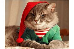 A section devoted to Christmas newsletters, with some suggestions and over 40 examples, good, bad and hilarious. Description from cridsl.com. I searched for this on bing.com/images