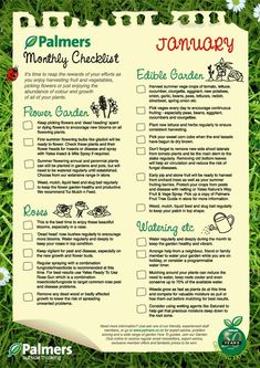 January Gardening NZ Tips January Gardening NZ Tips,vegetable garden plants January Gardening NZ Tips Related posts:January Garden Checklist (free printable!) - GardeningEdible Gardens for Kids Need to get gardening with the kids Indoor Vegetable Gardening, Vegetable Garden Planning, Home Vegetable Garden, Organic Gardening, Veggie Gardens, Indoor Garden, Easy Vegetables To Grow, Fall Vegetables, Planting Vegetables