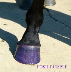 Colored hoof dressing that moisturizes and conditions your hooves while adding the perfect amount of glam! Pony Express, Glitter Dress, Best Sellers, Dressing, Horses, Girls, Toddler Girls, Bright Dress, Daughters