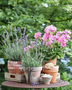 container gardening ideas for shade Cottage Garden Plants, Pink Garden, Love Garden, Garden Shop, Container Plants, Container Gardening, Outdoor Plants, Outdoor Gardens, Shabby Chic Garden