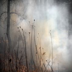 The Burn – a Photography Series by Jane Fulton Alt Photography Series, Nature Photography, Dame Nature, Encaustic Art, Foto Art, Belle Photo, Mists, Scenery, Beautiful