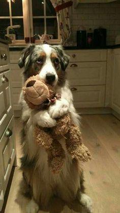 Fantastic Bear Brown Adorable Dog - 78c96155f02b0fb4d36597ccf8819eca--the-vets-to-the  Trends_577060  .jpg