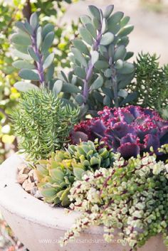 Succulents are so beautiful on their own it doesn't take much to make a great arrangement. These techniques will help your arrangements really stand out! Over the last few years I've created a lot ...
