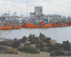 Puerto de Mar del Plata * Loberia