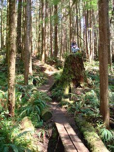 Really cool Big Ass Tree Stump - Vancouver Island