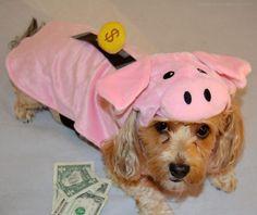 Save Money This Halloween - Re-Purpose an Old Costume! - YourDesignerDog