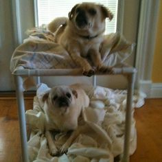 PVC Double Dog Bed:  Not much room for your pets?  Build a PVC Dog Bunk Bed for yours! - FORMUFIT.com
