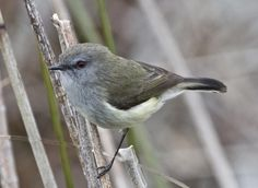 Sea Birds, Wild Birds, Birds Online, Flora And Fauna, Environmental Science, Bird Feathers, Amazing Nature, New Zealand, Art Projects