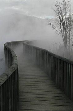Fog on the Wooden Walkway. #fog #setting #afeastofweeds