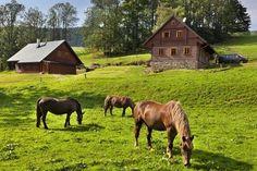 v Krkonoších - obě chalupy Cabin, Horses, House Styles, Animals, Home Decor, Animales, Decoration Home, Animaux, Room Decor