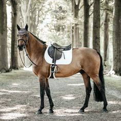 Our Saddle Pad Fishbone Jumping is shaped for jumping and provides excellent cushioning between the horse's back and the saddle while protecting against friction. This saddle pad has a unique fishbone quilting and is made out of a breathable material. Beautiful Horse Pictures, Most Beautiful Horses, Animals Beautiful, Friesian Horse, Palomino, Horse Riding Clothes, Bay Horse, Funny Horses, Equestrian Problems