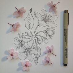 blossom redo