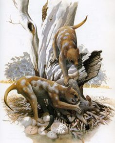 Two marsupial lions -- Thylacoleo carnifex