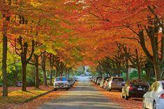 Autumn Color, Vancouver, Canada.