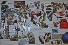 bird studies--parts of birds