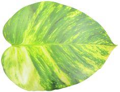 Pothos Vine Leaf Foam Placemat
