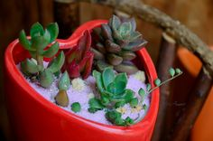 Succulents / Cactus -01 | Flickr - Photo Sharing!