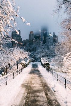 A winter walk in Central Park, New York.