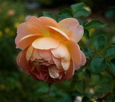 Pat Austin by Carolyn Parker, via Flickr
