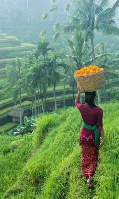 Bali Travel Beautiful Places Enjoying a True Bali Travel Experience Bali Travel Beautiful Places. Black Beauty Supply, Beauty Supply Near Me, Travel Photos, Travel Tips, Facial For Dry Skin, Beautiful Places To Travel, Amazing Places, Vacation Places, Vacations