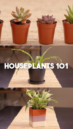 12 best air purifying indoor plants: bring beauty and well-being to your home with these easy to grow house plants, including indoor hanging plants, flowering plants, indoor plants for low light, and plant care tips! House Plants Decor, Plant Decor, Alovera Plant, Planting Succulents, Planting Flowers, Indoor Succulents, Succulent Containers, Succulent Planters, Container Flowers