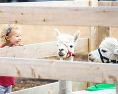 5 Activities Your Kids are Guaranteed to Love in Orange County (that aren't Disneyland) - OC ExploreOC Explore