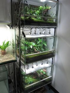 Terrarium Racks   Reminds me of the backup NAIB tanks for dart frogs and tree frogs (all SA and CA).