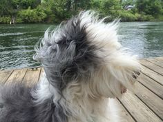 The wind in my hair! Abby hanging out at the Savannah River 2015
