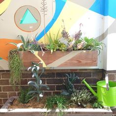 IQS Terrace. Pictured: kale, chives, rosemary and sage among many succulents.