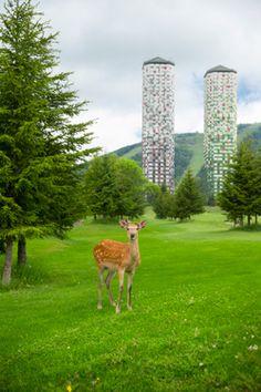 星野リゾート トマム ザ・タワー|HOTEL ALPHA TOMAMU THE TOWER