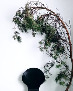 n a t u r a l  A r t // #pinebranch #naturalart #nature #deco #decoration #blackchair #whitewall #details #photography #valokuva… Pine Branch, White Walls, Celestial, Decoration, Interior, Nature, Design, Photography, Outdoor
