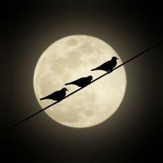 Bird silhouette on the moon Moon Photos, Moon Pictures, Miguel Angel Garcia, Moon Dance, Shoot The Moon, Sun Moon Stars, Moon Circle, Good Night Moon, Sky Night