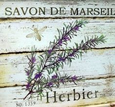 Lavender, Sola flowers, Herbs and Botanicals
