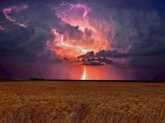 Thunderstorm over a wheat field in the Canadian Prairie.