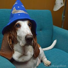 "Merlin is a magical Basset Hound. His special charming moves are ""the butt shimmy"" and ""goofy smile"". Share your basset! Goofy Smile, Basset Hound Dog, Bassett Hound, Dog Boarding, Love People, Merlin, Roxy, Puppy Love, Bliss"