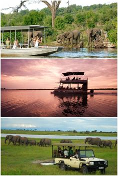There are so many amazing ways to witness the wildlife of the Chobe National Park   Safari   Africa   Sanctuary Chobe Chilwero