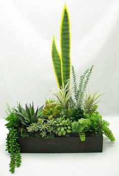 42 Ideas How To Make Succulent Arrangements Dish Garden Succulents In Containers, Container Plants, Cacti And Succulents, Planting Succulents, Container Gardening, Planting Flowers, Indoor Gardening, Cactus Plants, Potted Plants