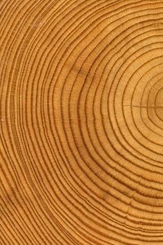 Tree Trunk Rings | Curved lines | Circular patterns More